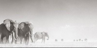 Nick Brandt i njegov svet životinja