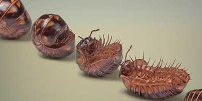 Neverovatni svet insekata  %Post Title