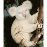 Albino životinje