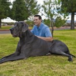 Najveći pas na svetu  %Post Title