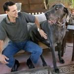 Najveći pas na svetu