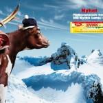 Norveške čokolade  %Post Title