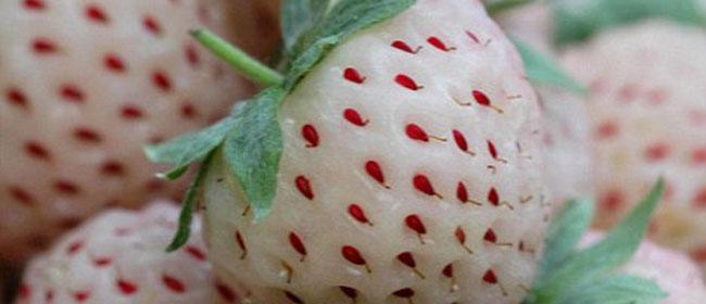 Nova vrsta voća