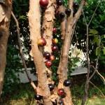Da li ste čuli za Džabutikaba voće?  %Post Title