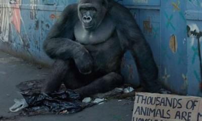 Životinje beskućnici  %Post Title