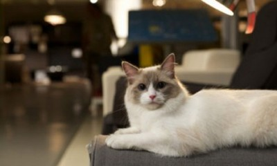 Ikea i 100 mačaka  %Post Title