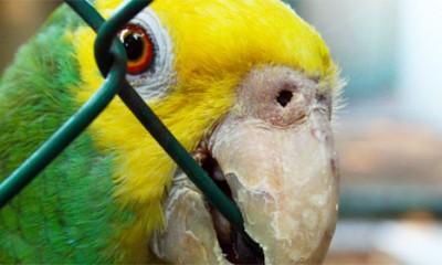 Papagaj narko diler