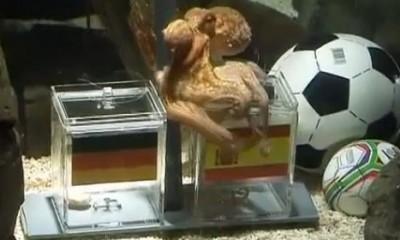 Preminula hobotnica Paul