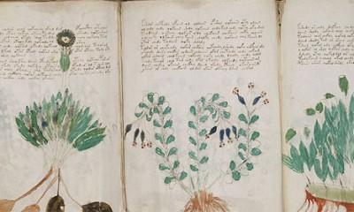Voynich Manuscript  %Post Title