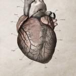 Kampanja za doniranje organa  %Post Title