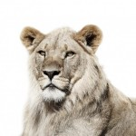 Životinjski portreti