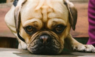 Zašto bi trebalo da kupite psa deci