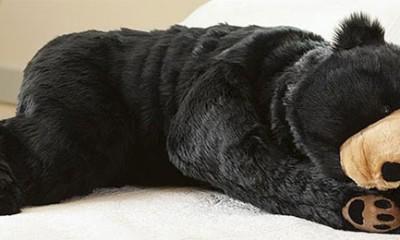 Medved u kome možete da spavate