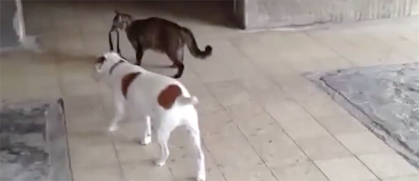 Monstrum mačka vodi psa