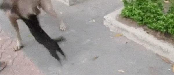 Opasne mačke brane bebe
