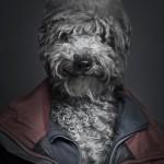 Psi i vlasnici  %Post Title