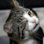 Mačke i emotikoni  %Post Title