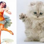 Mačke su bolje i od žena  %Post Title