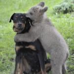 Slike životinja koje će vam ulepšati dan