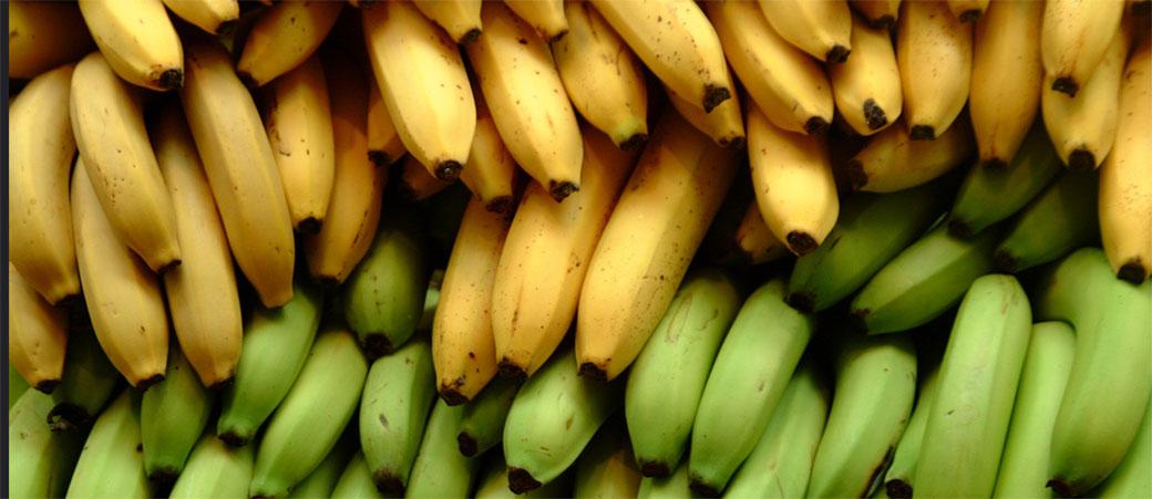Mračna prognoza: Ostajemo bez banana!