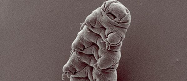 Najzad otkriveno kako minijaturna životinjica može da preživi SVE