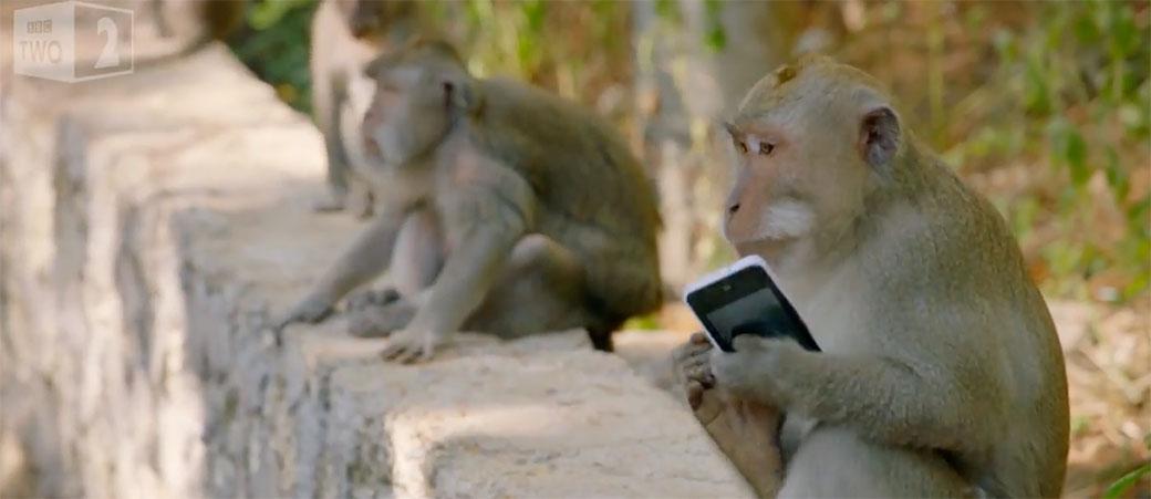 Majmuni evoluirali: Naučili da traže otkup za iPhone