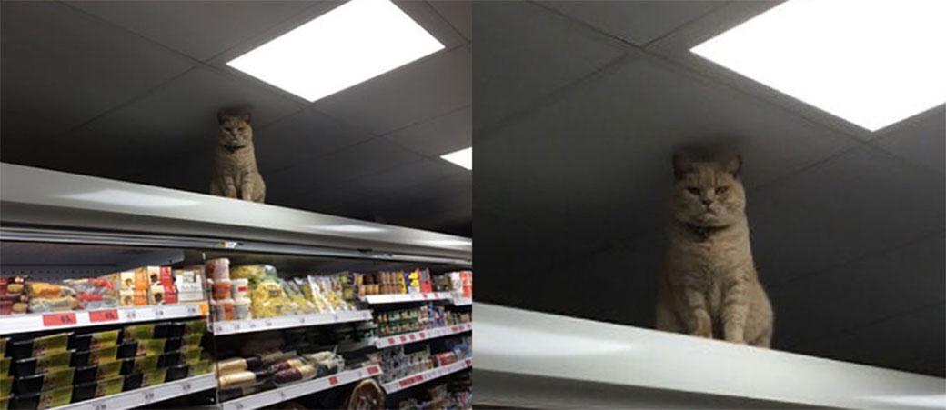 Mačka preuzela supermarket