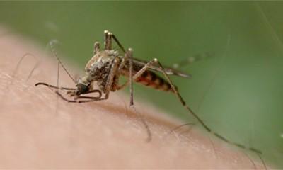 Virus Zika se širi brže nego što je iko mogao da zamisli  %Post Title