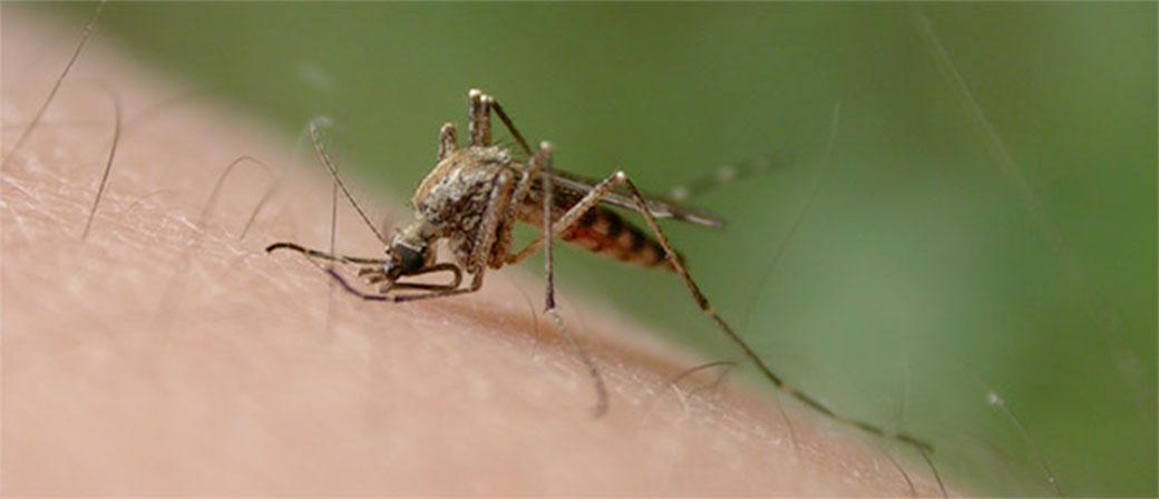 Virus Zika se širi brže nego što je iko mogao da zamisli