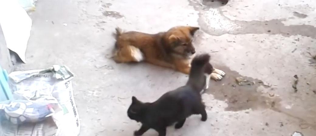 Maca dovela decu na upoznavanje sa starih prijateljem