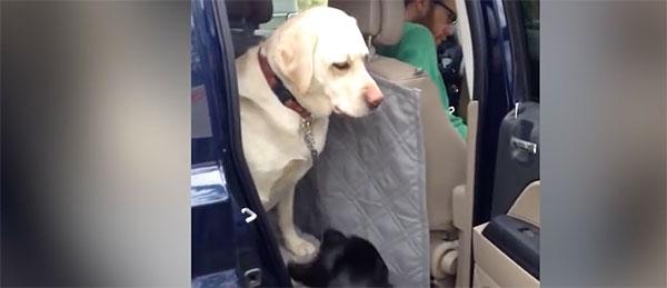 Ove životinje su pravi drugari
