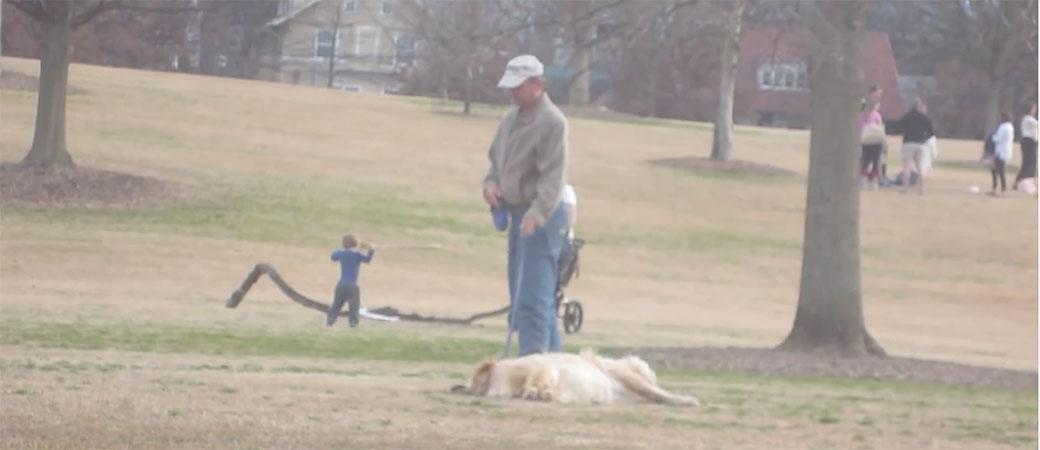 Pas neće kući i pravi se mrtav