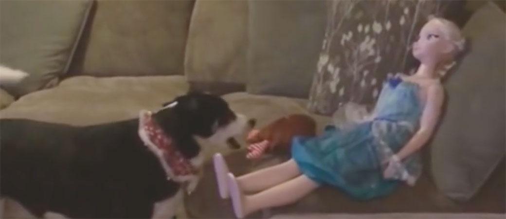 Zbunjeni pas hoće da se igra sa lutkom