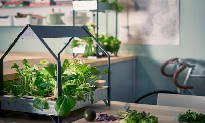 Ikea bašta: Najzad možete da gajite nanu za mojito  %Post Title