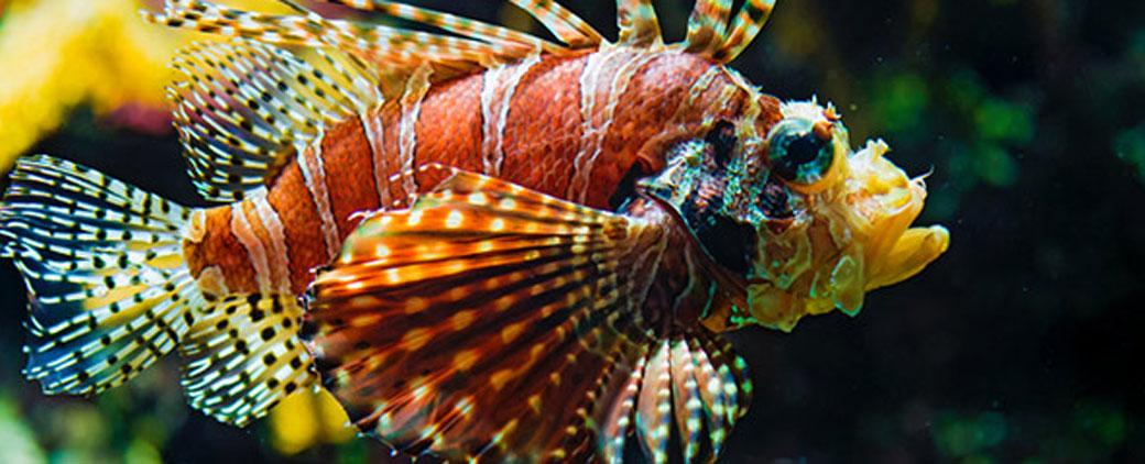 Opasna riba u Mediteranu