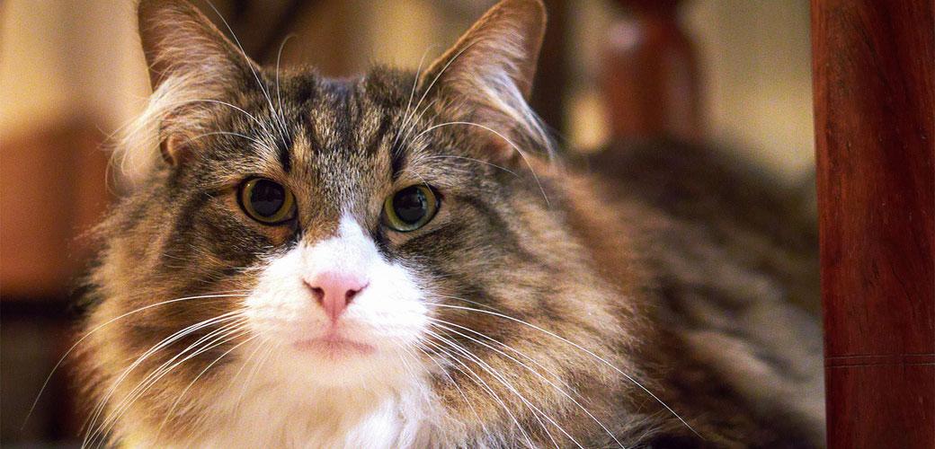 18 ludih činjenica o mačkama