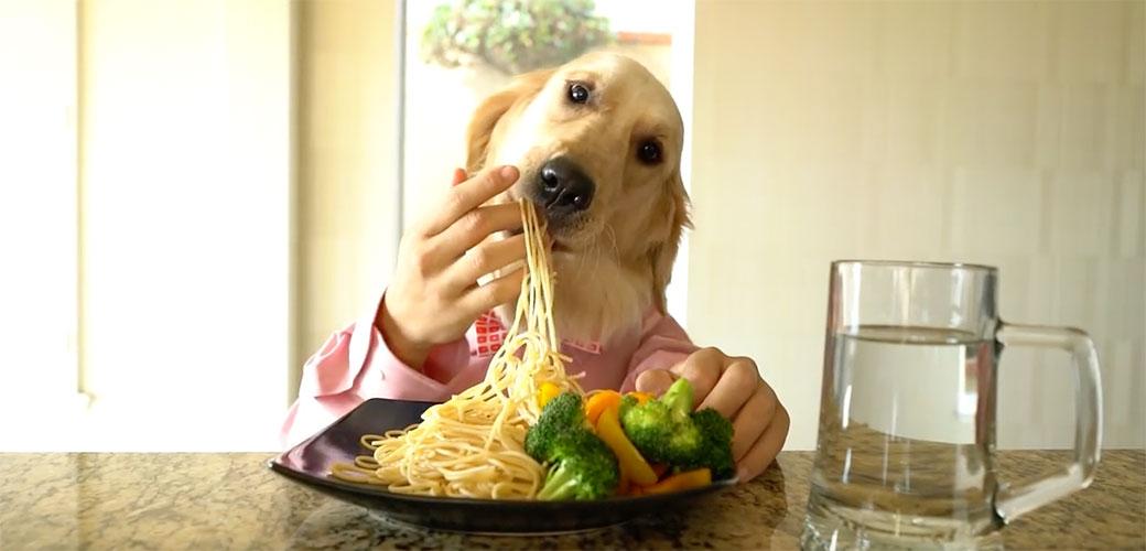 Pas koji kuva i jede je najbolja stvar ovog kišnog ponedeljka