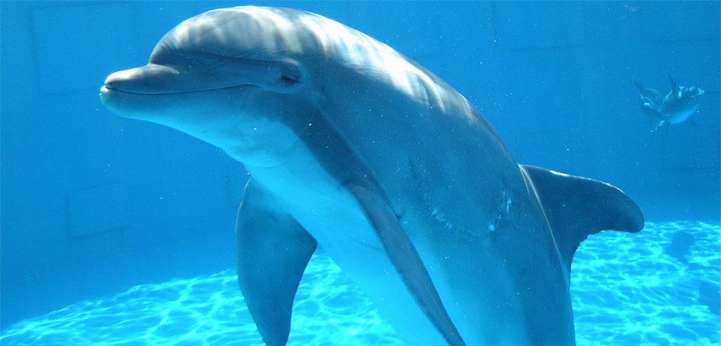 Delfini su pravi vladari našeg sveta