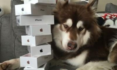 Ovaj pas ima osam novih telefona iPhone 7  %Post Title