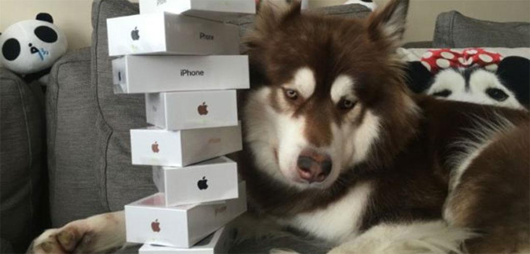 Ovaj pas ima osam novih telefona iPhone 7