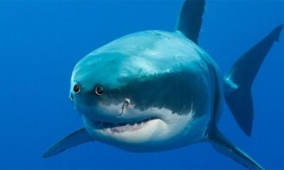 Kako bi životinje izgledale sa očima napred