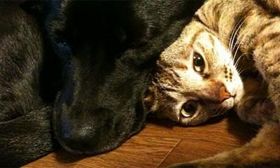 Pas ili mačka: Koji ljubimac je bolji  %Post Title