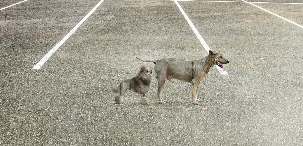 Slika: Ne bi trebalo da diskriminišete