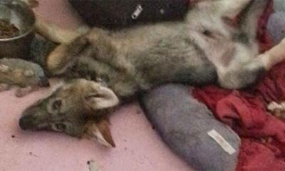 Udomio je štene, ali se brzo iznenadio