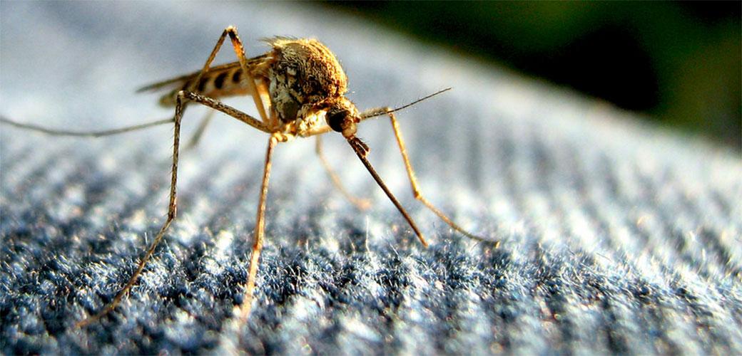 Zika virus uništava mušku plodnost