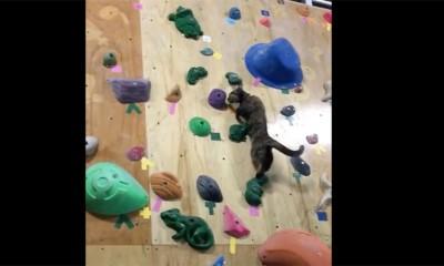 Mačka se penje bolje do vas  %Post Title