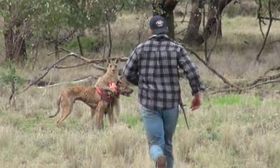 Ono kada ti kengur napadne psa