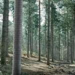 Reklama za kopiju drveta