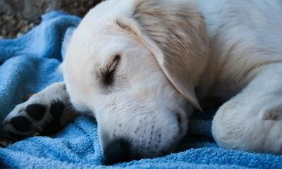 Evo o čemju psi sanjaju  %Post Title