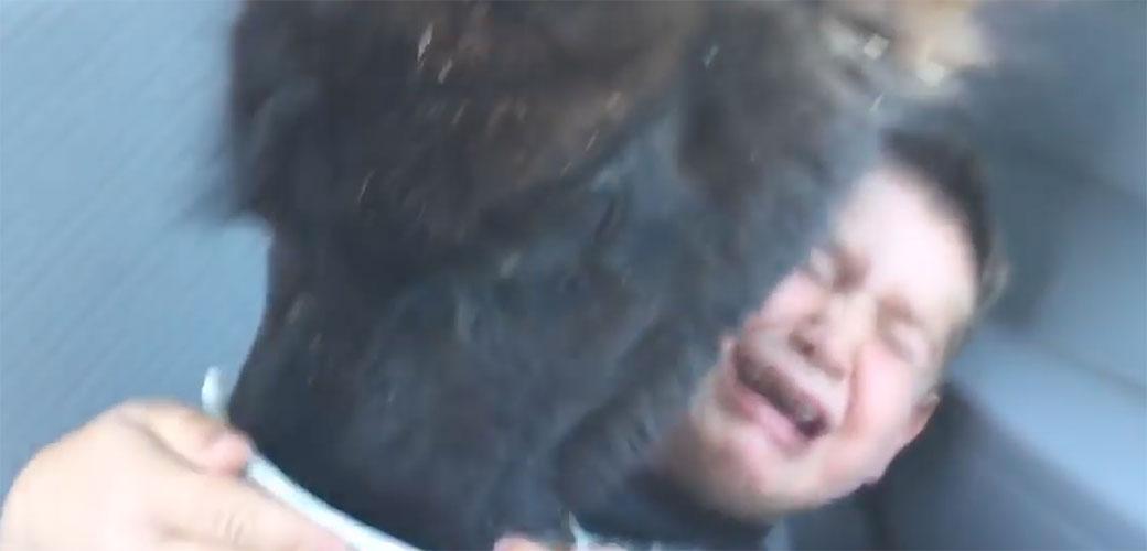 Slika: Gladna lama istraumirala klinca